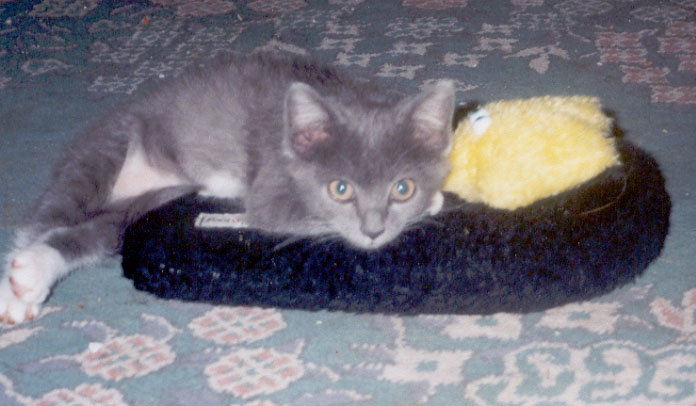 Bob relaxing at home in 'his' fuzzy slipper